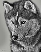 Akc Metal Prints - Siberian Husky 2 Metal Print by Larry Linton
