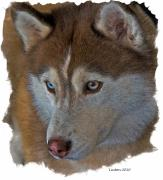 Dog Ceramics Framed Prints - Siberian Husky Framed Print by Larry Linton