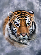 Siberian Tiger Posters - Siberian Tiger Poster by Julie L Hoddinott