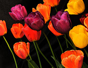 Pictures Photo Originals - Sidewalk Tulips by Brent Easley