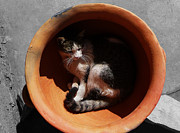 Pictures Of Cats Photo Metal Prints - Siesta 3 Metal Print by Xueling Zou