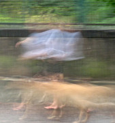 Dog Walking Photo Prints - Singing in the Rain Print by Richard Cummings