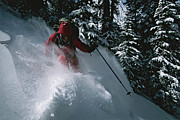 Snow Scenes Art - Skier Phil Atkinson Skiing Backcountry by Tim Laman