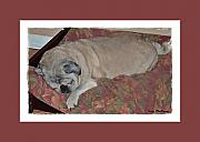 Sleeping Dog Mixed Media Posters - Sleeping Pug Poster by Terry Mulligan