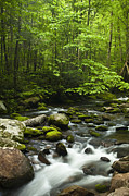 Smoky Mountains Posters - Smoky Mountain Stream Poster by Andrew Soundarajan