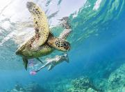 Diving Snorkeling Art Prints - Snorkeling with Turtle Print by Monica & Michael Sweet - Printscapes
