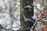 Paul SEQUENCE Ferguson             sequence dot net - Snow Bird