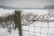 Winter Snow Landscape Prints - Snow fence  Print by Sandra Cunningham