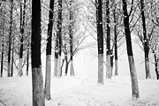 Jiangsu Province Framed Prints - Snow In The Forest Framed Print by Huchen Lu