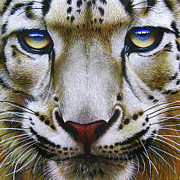 Asian Paintings - Snow Leopard by Jurek Zamoyski