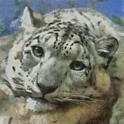 Zoo Animals Framed Prints - Snow Leopard Painterly Framed Print by Ernie Echols