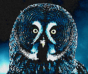 Colette Posters - Snow Owl Poster by Colette Hera  Guggenheim