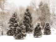 Snow Digital Art - Snow Pines by Jessica Jenney