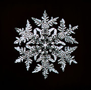 Winter Photos Posters - Snowflake Poster by Mehau Kulyk