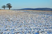 Winter Landscape Prints - Snowy Fields In Winter Print by Sami Sarkis