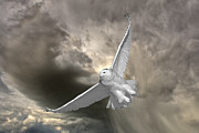 Profile Digital Art Prints - Snowy Owl in Flight Print by Mark Duffy