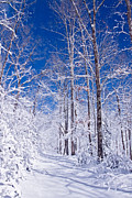 Winter Prints Prints - Snowy Path Print by Rob Travis