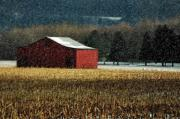 Cornfield Posters - Snowy Red Barn In Winter Poster by Lois Bryan