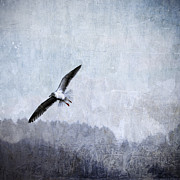 Gull Seagull Framed Prints - Soaring Seagull Framed Print by Carol Leigh