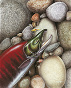 Salmon Fishing Paintings - Sockeye Salmon by JQ Licensing