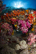Raja Ampat Photos - Soft Coral In Raja Ampat, Indonesia by Todd Winner