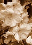 Soft Lighting Prints - Soft Sepia Floral Print by Carol Groenen