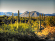 Sonoran Desert Framed Prints - Sonoran Desert Framed Print by Saija  Lehtonen