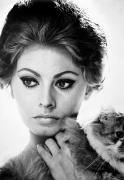 Fashion Photograph Posters - Sophia Loren (1934-  ) Poster by Granger