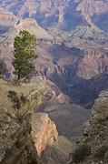 South Rim, Grand Canyon, Arizona, Usa Print by Peter Adams