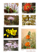 Judee Stalmack Framed Prints - Southwest Wildflower Collection Framed Print by Judee Stalmack