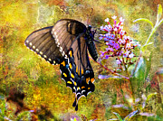 Butterfly Digital Art Posters - Spicebush Butterfly Looking Pretty Poster by J Larry Walker