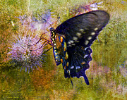Backyard Digital Art Framed Prints - Spicebush Swallowtail Butterfly Framed Print by J Larry Walker