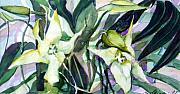 Lavender Drawings - Spider Orchids by Mindy Newman
