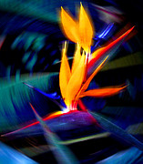 Yellow Bird Of Paradise Prints - Spinning Bird Print by Ron Regalado