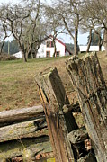 Split Rail Fence Photos - Split-rail by Frank Townsley