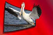 Pelican Landing Prints - Spread Your Wings Print by Shane Bechler