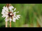 Amee Stadler - Spreading Seeds