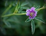 Amee Stadler - Spring Bloom