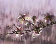 Spring Blossoms Print by Marion McCristall