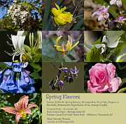 Bittersweet Framed Prints - Spring Flavors Framed Print by Warren M Gray