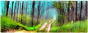 Dirt Roads Mixed Media - Spring green by Gina Signore
