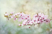 Painterly Photos - Spring Reverie by Jacky Parker
