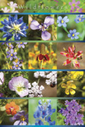 Flowers Posters Prints - Spring Wildflowers II Print by Stephen Anderson
