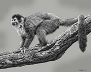 Costa Digital Art Prints - Squirrel Monkey Print by Larry Linton