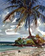 Tropic Paintings - St. Croix Beach by Donald Maier