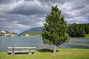 Wood Bench Posters - St moritz lake Poster by Mats Silvan