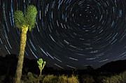 Star Valley Framed Prints - Star Trails In Joshua Tree Framed Print by Dung Ma