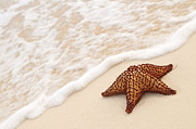 Ocean Shore Photo Posters - Starfish and ocean wave Poster by Elena Elisseeva