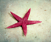 Sand Photography Prints - Starfish Print by Kristin Kreet