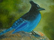 Stellar Paintings - Stellar Jay by Peg Whitacre